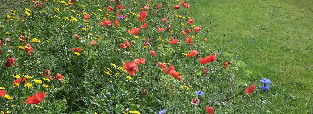 Kelly-Garden-Services-Sustainable gardening